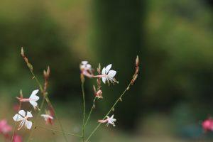 Gora flowers