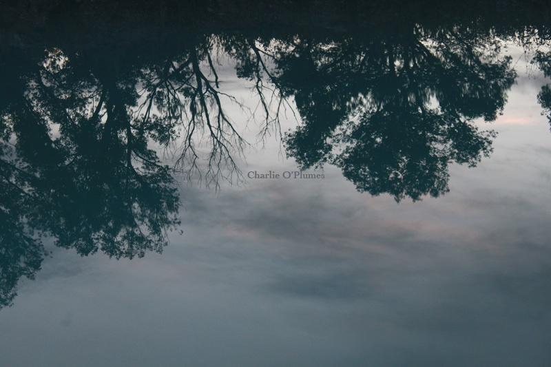 reflet verre soir arbres ciel